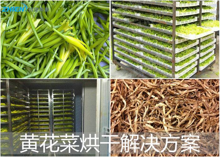 黄花菜烘干机 黄花菜烘干房 黄花菜烘干工艺解决方案-空气能热泵厂家